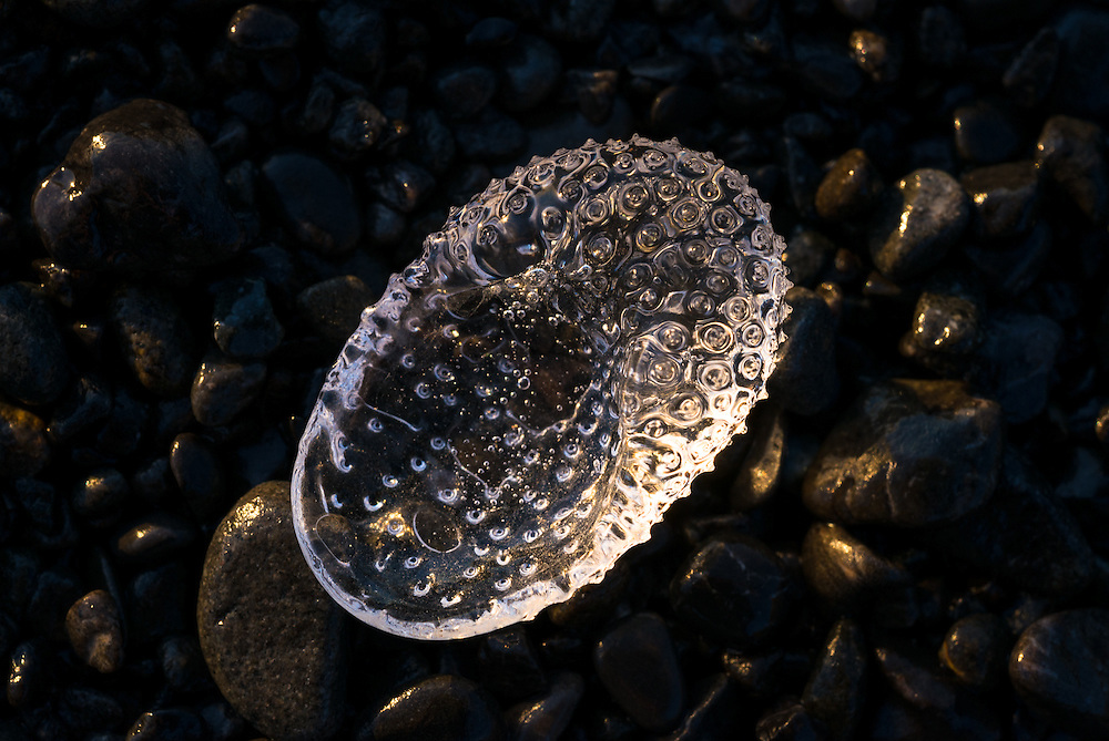 This unknown creature caught my eye as I walked past on the beach. I bent down to marvel at this natural jewel and managed to take a few photographs before the tide took it back to sea.