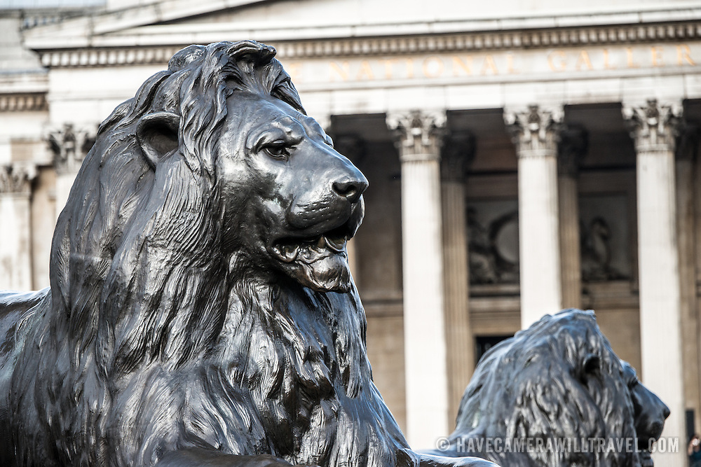 One of four large statues of lions that sit at the base of Nelson's Column in Trafalgar Square in central London. In the background are some of the columns on the facade of the British National Gallery.