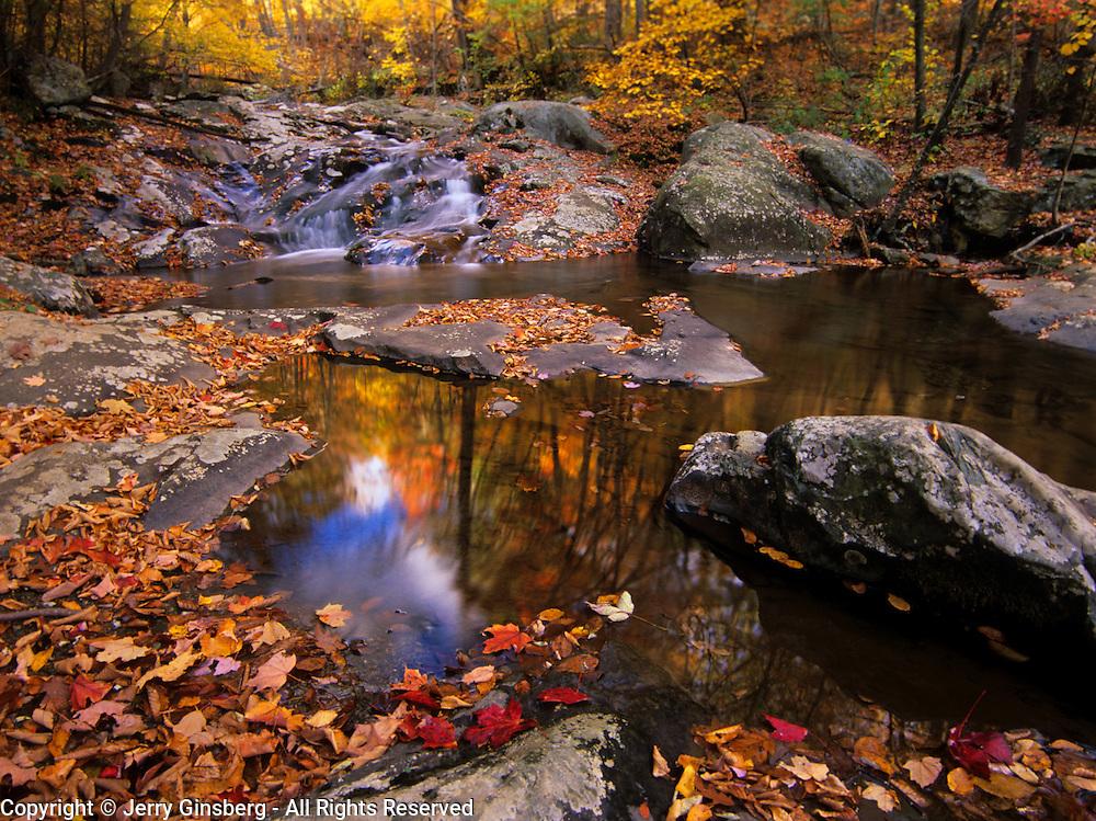 Trees in fall color reflect in still pool at Upper Whiteoak Falls in Shenandoah National Park, VA.