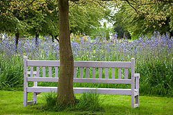Painted lilac bench in front of camassias at Pettifers