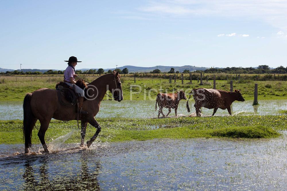 Young boy Gaucho cowboy Brazilian riding a horse through water. Working Gaucho Fazenda in Rio Grande do Sul, Brazil.