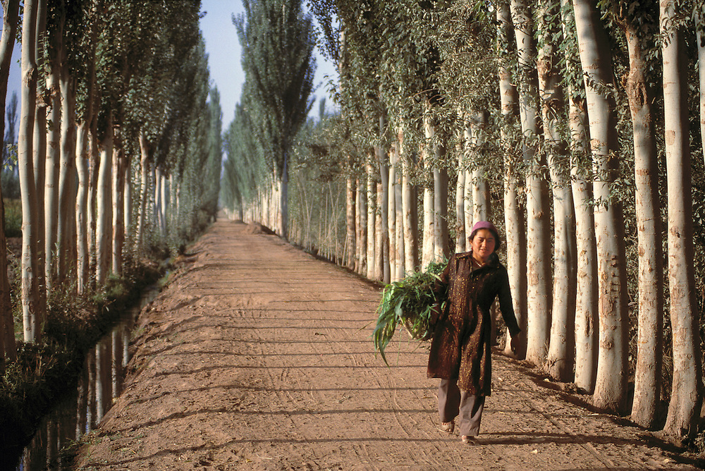 A woman heads home along a tree-lined, dirt road, carrying forage against her hip, in Kashgar, Xinjiang, China.