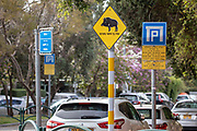 A sign warning from wild boars next to a parking sign in a street in Haifa, Israel, April 09, 2021. Several neighborhoods in the northern Israeli city are being visited by families of wild boars. Many of the animals felt safer to come out of the Carmel woods surrounding the city in search for food, as most people were confined to their homes due to covid-19 lockdowns. As Israel slowly returned to normal life, following a large scale vaccination operation, human and animal encounters became more and more common.