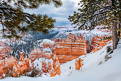 Pines, pinnacles and hoodoos under a deep snow in Bryce National Park.  Cold but beautiful there are few things prettier than the American Southwest under a fresh blanket of snow.