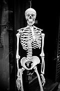 A skeleton in the street,  Manhattan. New York City, 23 june 2010. Christian Mantuano / OneShot