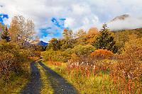 Fall colors and road in Kodiak, Alaska