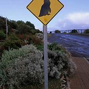 Australia, Little Fairy Penguin crossing road sign. Kangaroo Island.