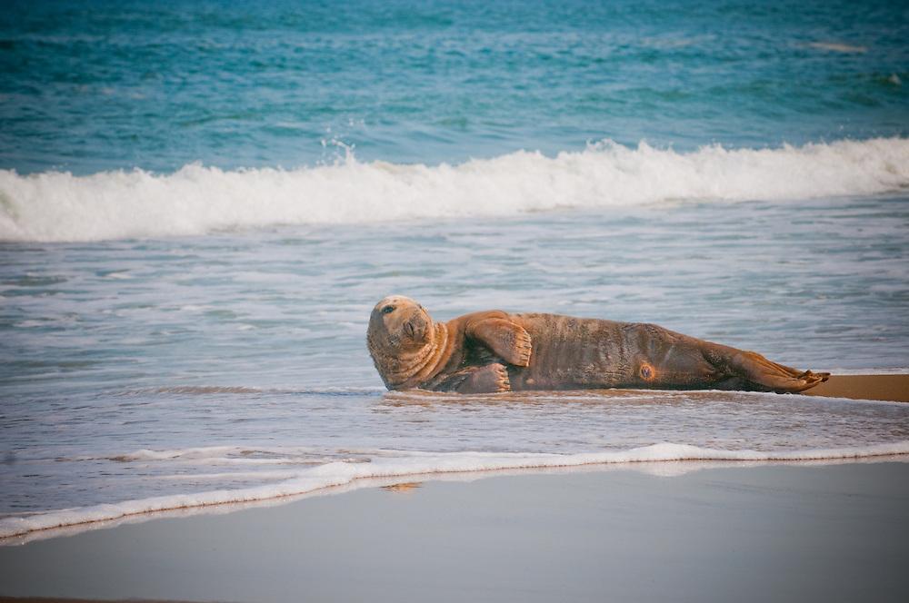 North Carolina Seal