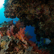 Dive Spot: Panorama Reef