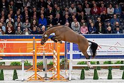 101, Macon VDL<br /> KWPN hengstenkeuring - 's Hertogenbosch 2020<br /> © Hippo Foto - Dirk Caremans<br />  29/01/2020