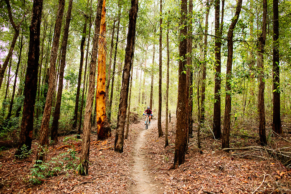 Female mountain biker riding through a shady and forested section of Jacks Ridge, Nambucca Heads.