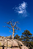 Dead tree and cloud, Cherokee Park Rd, CO
