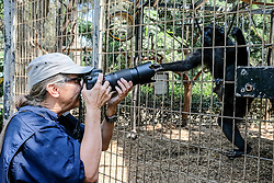 August 27, 2017 - Ramat Gan, Israel - Niv, a female, four year old Sulawesi Crested Macaque, demonstrates her maternal instincts with the adoption of a chick, which has entered the enclosure shared by Niv and her mother, Nati, at the Safari Zoological Center. Niv has been spotted hugging, grooming and feeding the chick, while the chick runs to her arms when startled and seeking security. The Sulawesi Crested Macaque, from the island of Sulawesi, Indonesia, is critically endangered with only about 6,000 individuals in the wild. (Credit Image: © Nir Alon via ZUMA Wire)