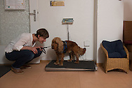 Die Tierarztpraxis am Millerntor