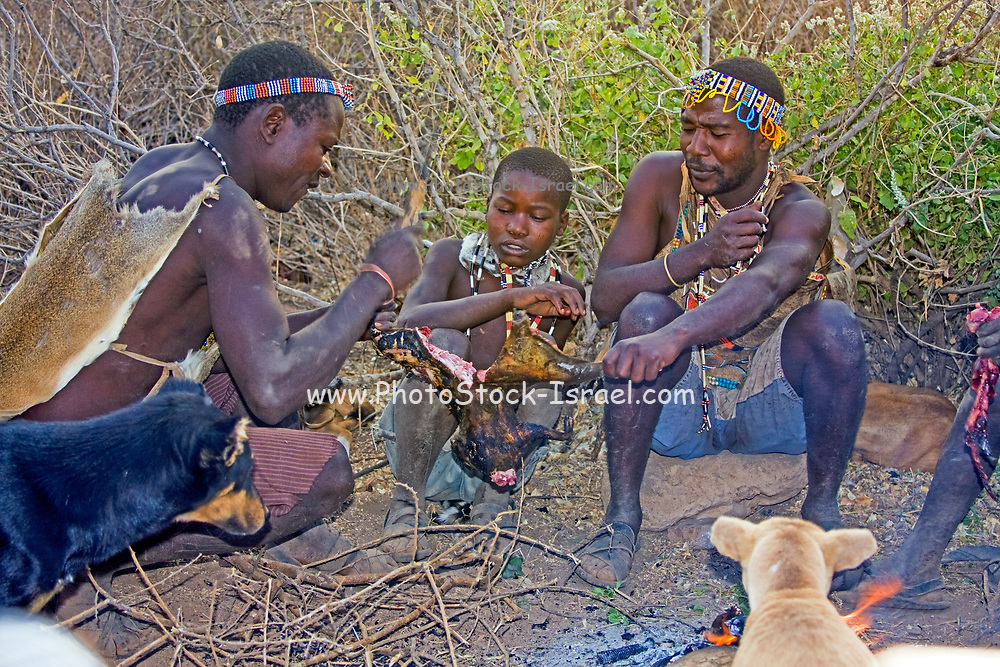 Hadza men preparing the arrows before a hunting expedition. The Hadza, or Hadzabe, are a small ethnic group in north-central tanzania, living around Lake Eyasi in the Central Rift Valley and in the neighboring Serengeti Plateau. Tanzania, Africa