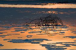 Il complesso produttivo delle saline è situato nel comune italiano di Margherita di Savoia (nome dato dagli abitanti in onore alla regina d'Italia che molto si adoperò nei confronti dei salinieri) nella provincia di Barletta-Andria-Trani in Puglia. Sono le più grandi d'Europa e le seconde nel mondo, in grado di produrre circa la metà del sale marino nazionale (500.000 di tonnellate annue).All'interno dei suoi bacini si sono insediate popolazioni di uccelli migratori e non, divenuti stanziali quali il fenicottero rosa, airone cenerino, garzetta, avocetta, cavaliere d'Italia, chiurlo, chiurlotello, fischione, volpoca..Arbusti nelle acque di un bacino. Le chiazze che si vedono sulla superficie dell'acqua sono formate da schiuma prodotta dall'alta concentrazione di sale nell'acqua.
