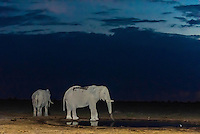 Elephant at water hole, Nxai Pan National Park, Botswana.