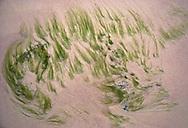 """Seas grass on """"pink sands"""" beach, Bonaire"""