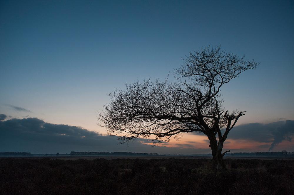 Nederland, Westerbork, 21 nov 2010.Drenthe, natuurgebied  met heide en solitaire boom in avondschemering.Foto (c)  Michiel Wijnbergh