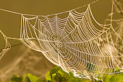 round spider web at sunset, Israel