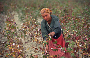 Ashgabat, Turkmenistan, October 1997..A young girl picks cotton in the fields outside the Turkmen capital. Poverty-stricken, but rich in oil and gas resources, this Central Asian former Soviet republic is ruled by the autocratic President Saparmurat Niyazov, or Turkmenbashi as he has renamed himself...............Hollandse Hoogte