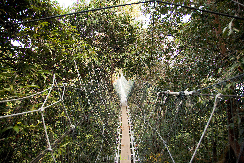 Canopy walkway through the forest at Batang Al National Park, Kuching, Sarawak, Malaysian Borneo