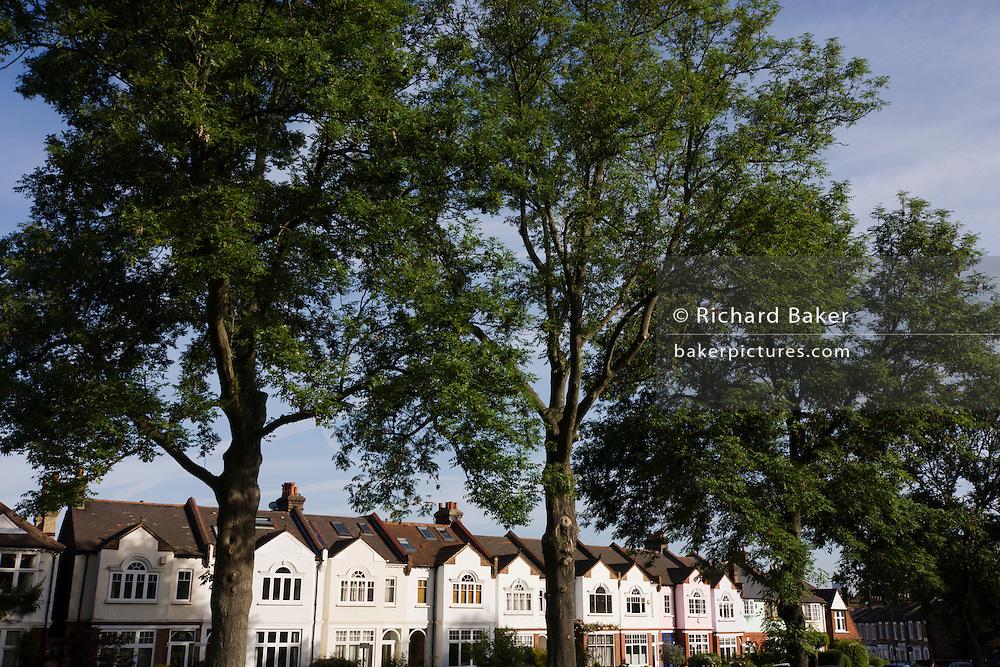Period Edwardian-era homes near tall  100 year-old mature ash trees in Ruskin Park, Lambeth, South London.