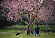 U.S. President Barack Obama walks with his family and new pet dog Bo, a six-month old male Portuguese water dog, on the South Lawn at the White House in Washington, April 14, 2009.  REUTERS/Jim Young