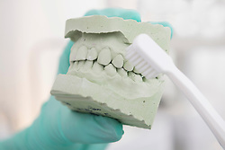 Dentist hand holding a model of teeth and showing how to clean the teeth with toothbrush, Munich, Bavaria, Germany
