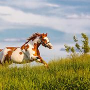 20160607 Paint horse girl