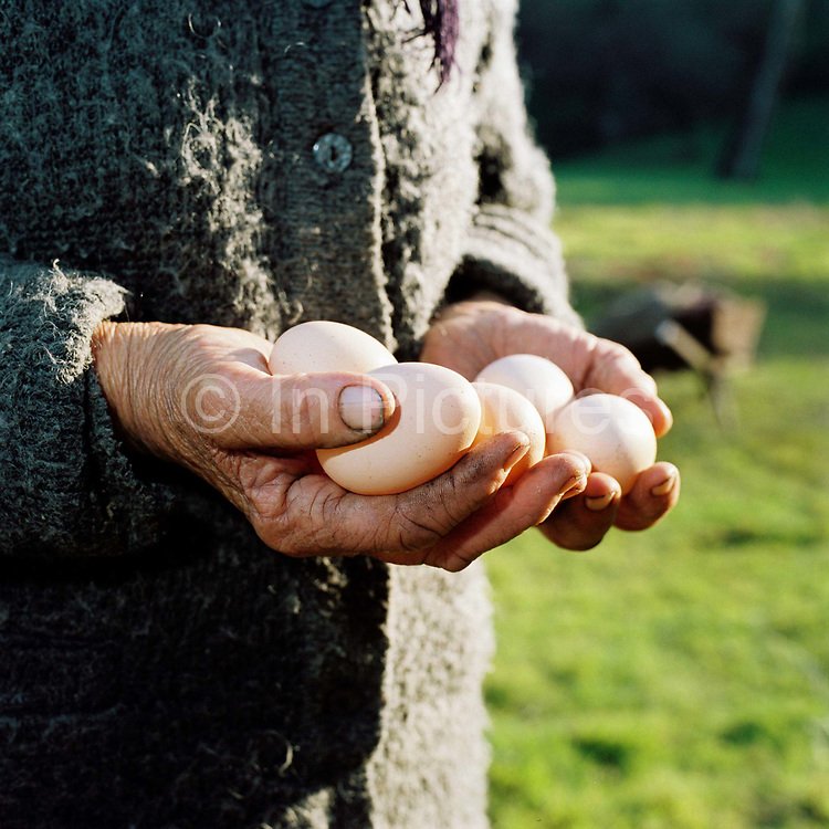 Peasant farmer Ioana Dragus holds a handful of hen's eggs at her smallholding in Oncesti, Maramures, Romania