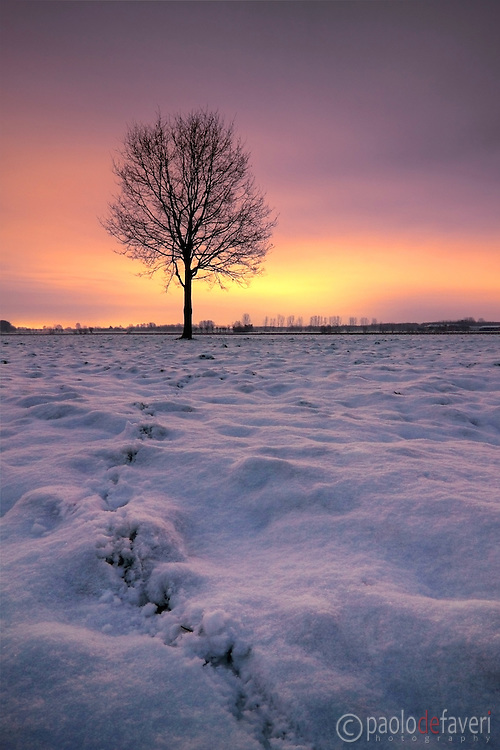 A scene of the fields around my hometown of Scalenghe in Piedmont, Italy, in winter dress. Taken at dawn on a utterly cold morning at the end of December. The tracks in the snow are rabbit's footprints.