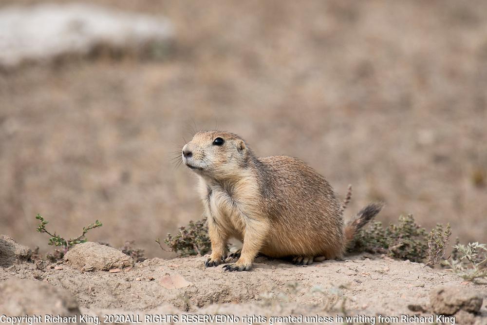 Wildlife photography from Michigan USA