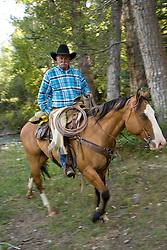 United States, Montana, Livingston, wragnler on horse in forest