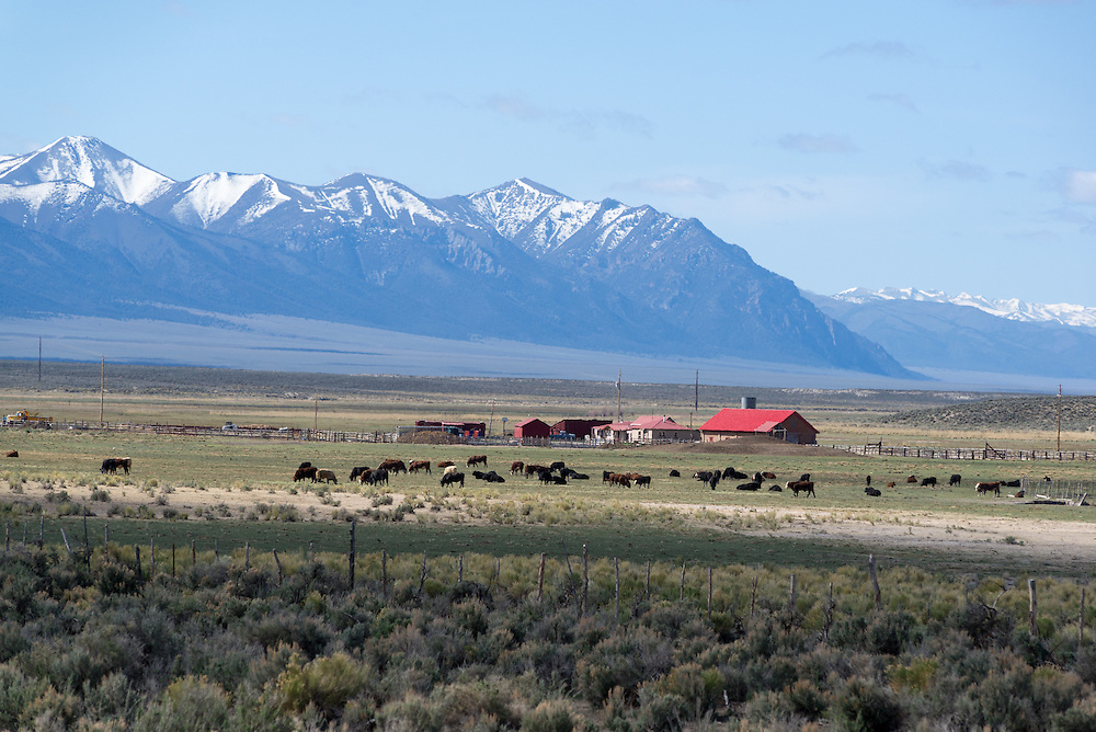 Ranch below the Toiyabe Range, Nevada.