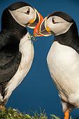 Seabirds and gulls