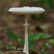 A mushroom in the forest on Komodo Island, Indonesia.