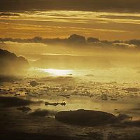 Icebergs float near the Loubet Coast on the Antarctic Peninsula.