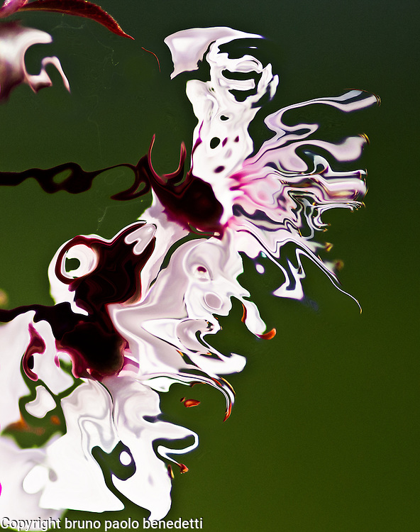 abstract fluid fantasy, white shape with pink and violet shades and brown spots on blurred green background.