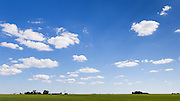 Green early crop  field under blue sky with cumulus clouds near Jimbour Queensland, Australia <br /> <br /> Editions:- Open Edition Print / Stock Image