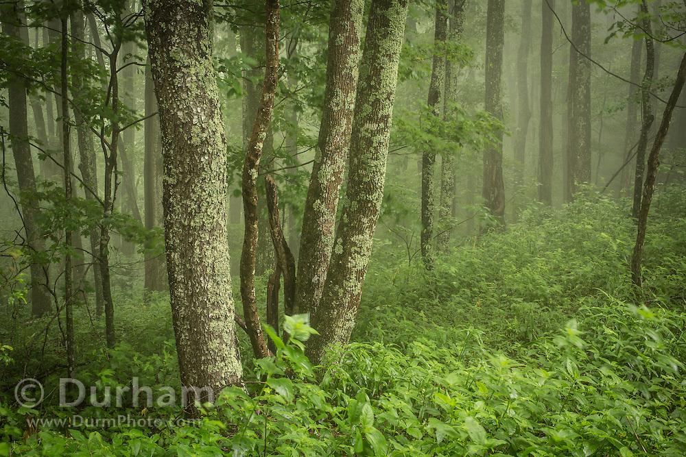 Fog in the north Cherokee National Forest, Tennessee.