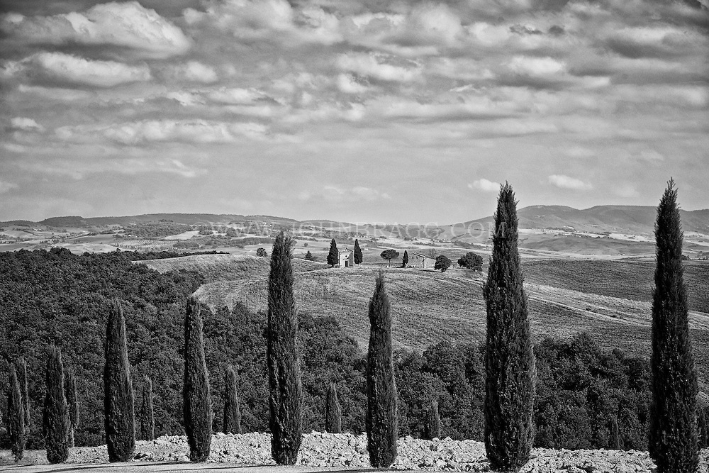 Black and white image of rows of cypress trees lining the roadway that meanders through Val D'Orcia, a region of Tuscany.