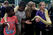 Local children enjoy handling a Burmese Python in their local park during a community festival. As part of an annual event in Ruskin Park in the London borough of Lambeth, neighbours and friends meet for an afternoon of self-initiated events including this visiting reptile and its nearby owner. The kids are happy to hold the animal whose skin is neither slimy nor cold. They love the flicking forked tongue and the way it constantly moves around their necks without the dangers of a boa constrictor. The Python is an unusual yellow that is more noticeable. The young people are from an assortment of family backgrounds and ethnicities: white Caucasian and black afro-Caribbean.