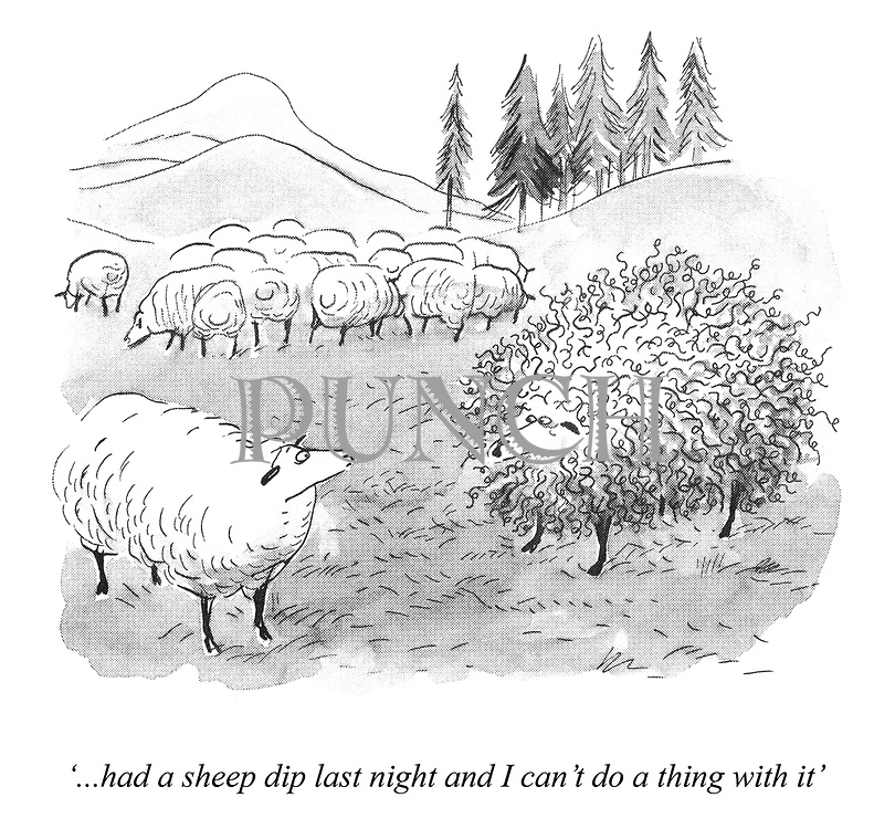 '...had a sheep dip last night and I can't do a thing with it'