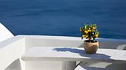 Miniature orange plant on a white ledge in Oia, Santorini, Greece.