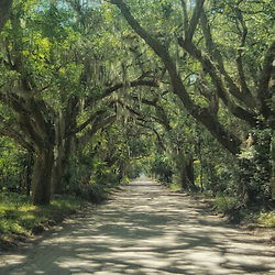 The Lovely Lowcountry