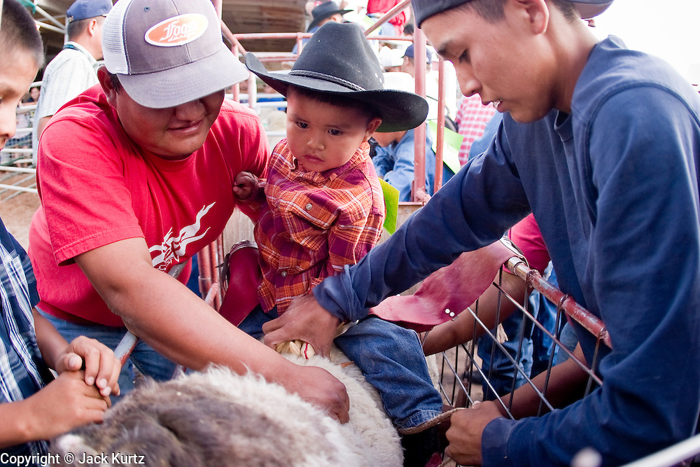 """10 SEPTEMBER 2004 - WINDOW ROCK, AZ: Men help a youngster get set for the """"Wooly Ride"""" at the 58th annual Navajo Nation Fair in Window Rock, AZ. The Navajo Nation Fair is the largest annual event in Window Rock, the capitol of the Navajo Nation, the largest Indian reservation in the US. The Navajo Nation Fair is one of the largest Native American events in the United States and features traditional Navajo events, like fry bread making contests, pow-wows and an all Indian rodeo. The Wooly Ride, also called Mutton Busting, is a rodeo for children six years old and younger. The youngsters are set on a sheep which is then turned loose in the arena. Points are awarded for style and length of ride. Wooly Riding is extremely popular on the Navajo reservation, which has a strong cattle and sheep ranching tradition.  PHOTO BY JACK KURTZ"""