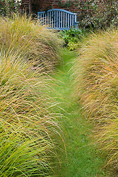 Looking along grass path lined with Stipa arundinacea syn. Anemanthele lessoniana towards blue bench
