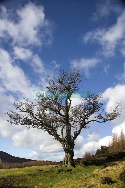 July 21, 2019 - Tree In Field, Yorkshire, England (Credit Image: © John Short/Design Pics via ZUMA Wire)