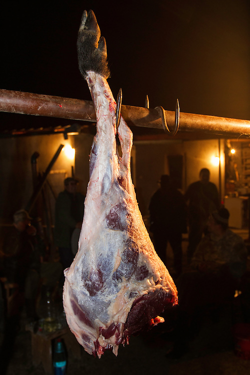 Freshly prepared meat of a female Wild boar (Sus scrofa) that was shot during a driving hunt in the forest area outside the village of Mehadia, Caras Severin, Romania.